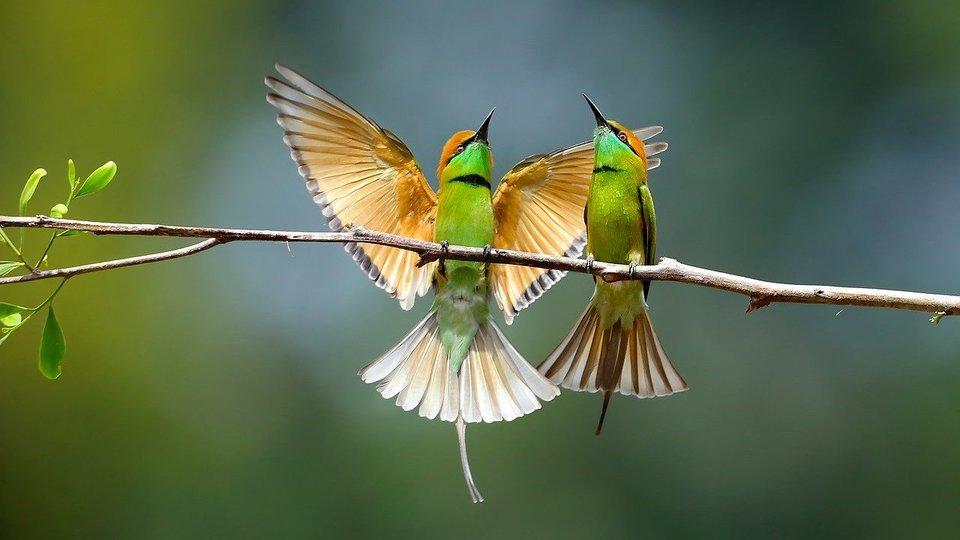 Muži s velkými ptáky